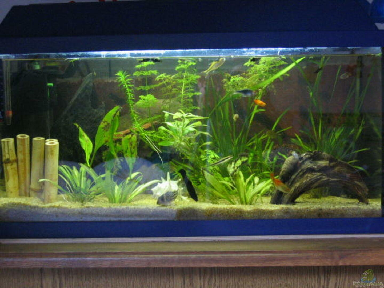 aquarium von dennis h hnisch becken 2575. Black Bedroom Furniture Sets. Home Design Ideas