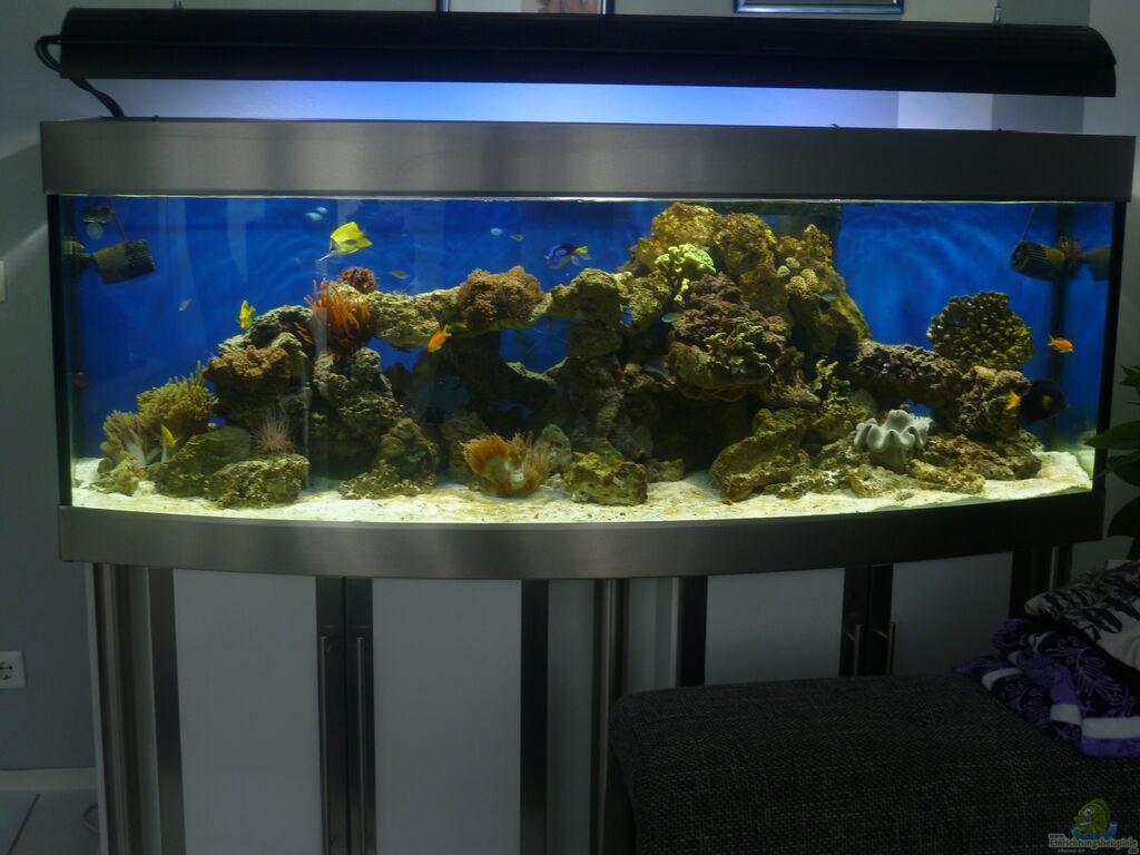 Aquarium von sid becken 25756 for Aquarium einsteiger