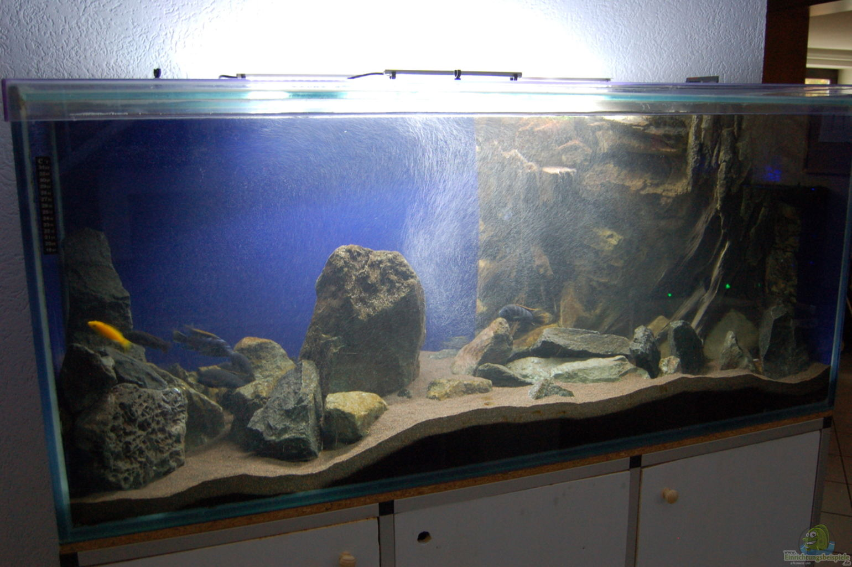 aquarium von christian schl ter blauer felsen. Black Bedroom Furniture Sets. Home Design Ideas