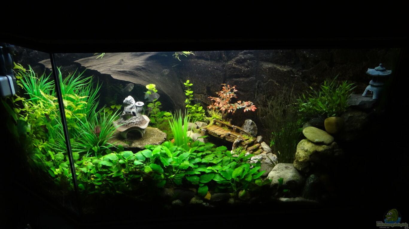 Aquarium von mcfly kleine unterwasserwelt for Robuste zierfische