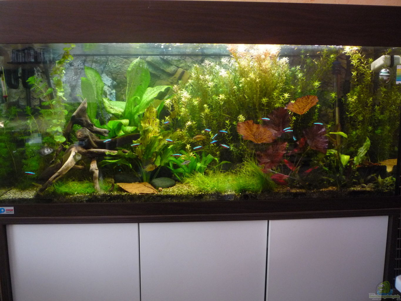 Example no 25827 from the category community tanks for Aquarium corner decoration