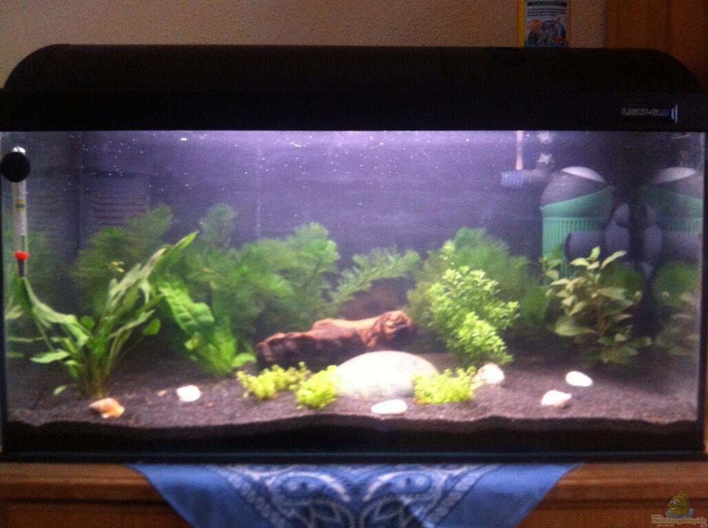 aquarium von schnegge s damerikabecken. Black Bedroom Furniture Sets. Home Design Ideas