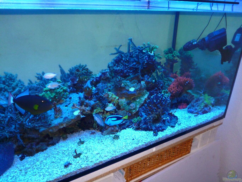 Aquarium von norman kutzner becken 25894 for Aquarium becken