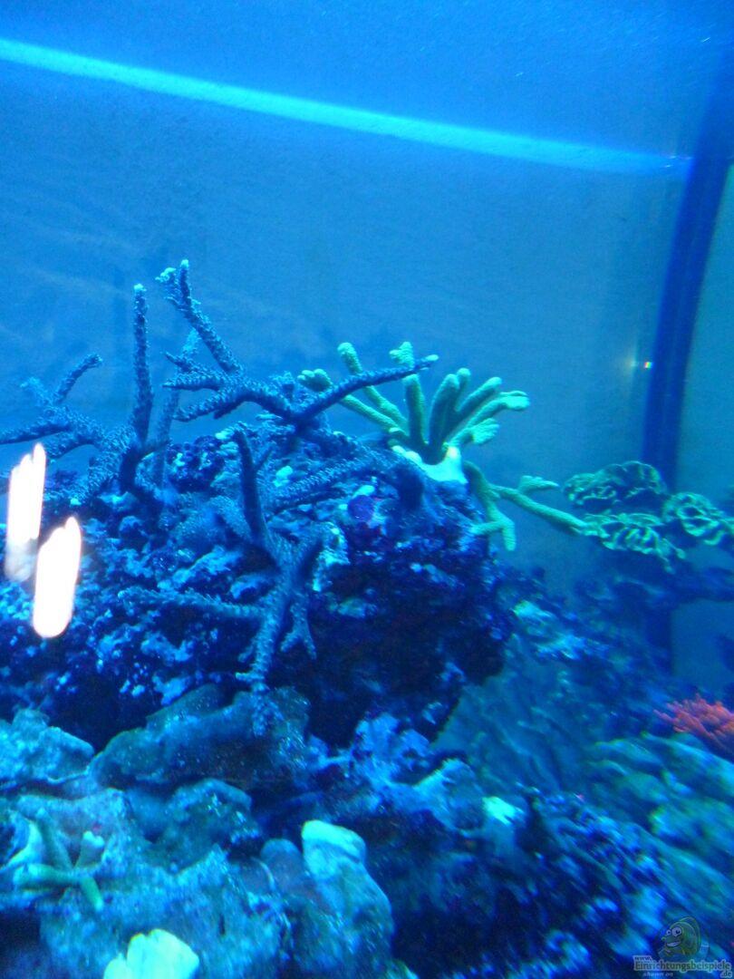 aquarium von norman kutzner becken 25894. Black Bedroom Furniture Sets. Home Design Ideas