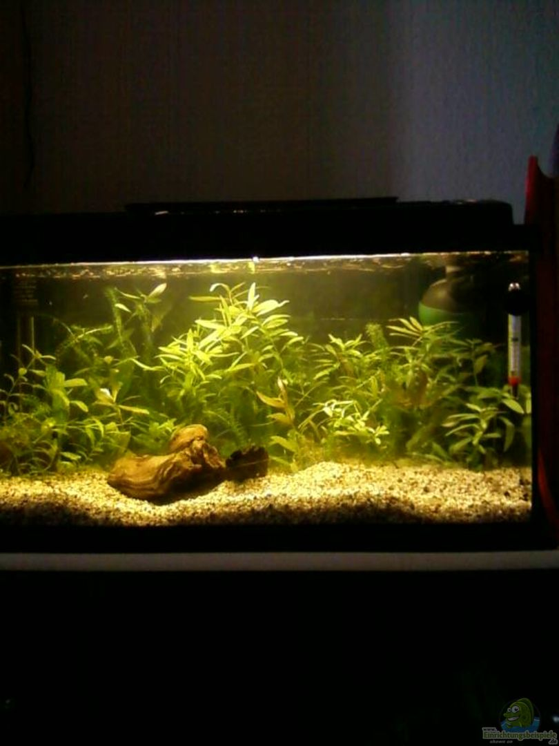 aquarium von reinhold berk mein 54l becken neu gemacht. Black Bedroom Furniture Sets. Home Design Ideas