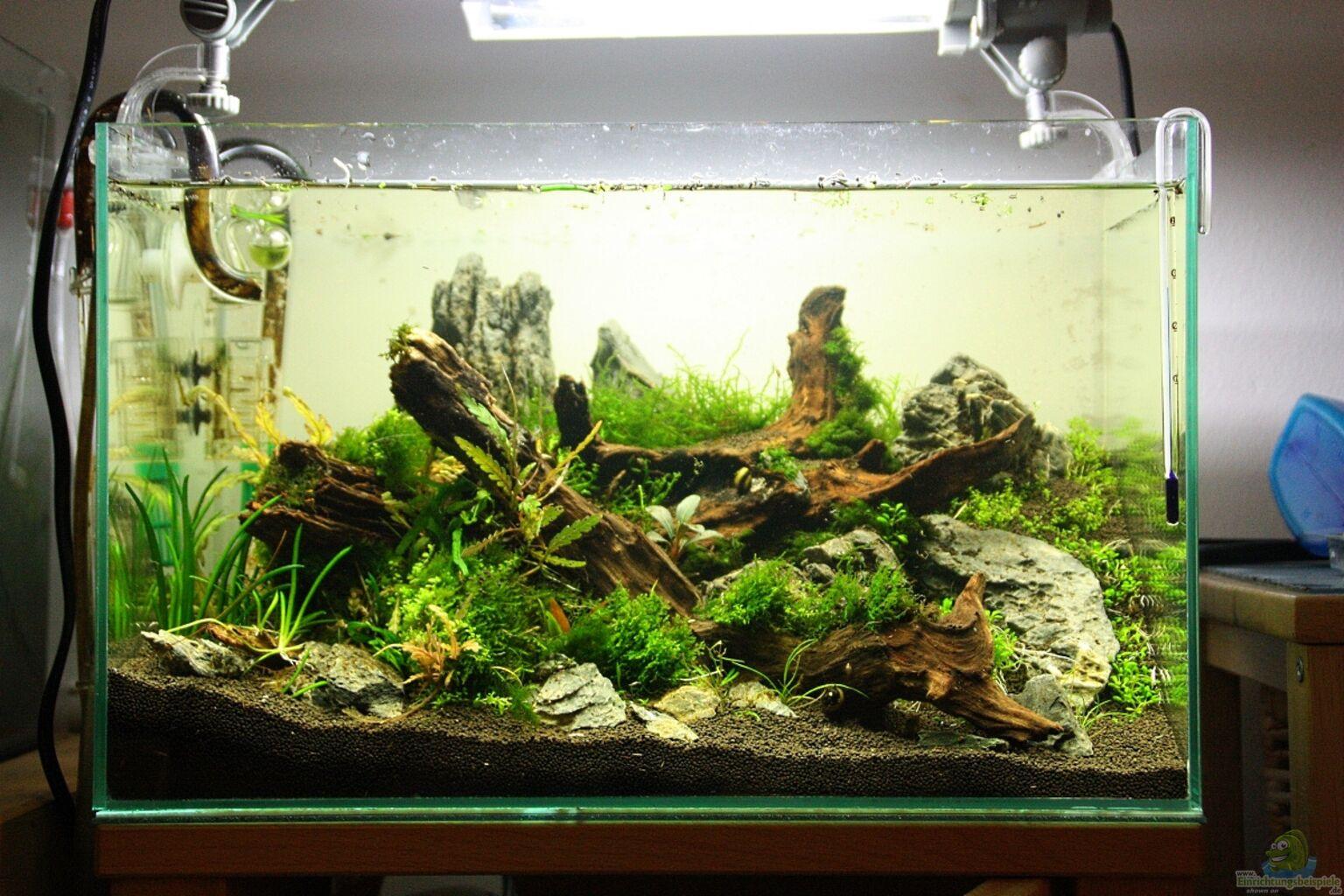 aquarium von arami gurami zwischen den regalen. Black Bedroom Furniture Sets. Home Design Ideas