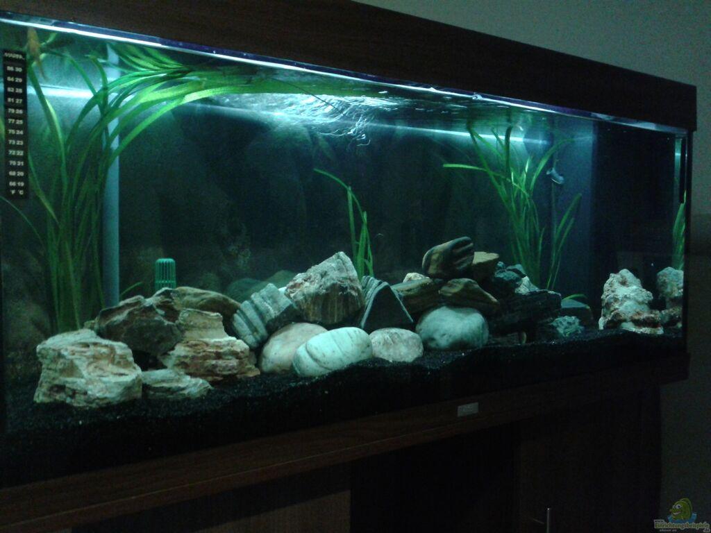 aquarium von michi1987 malawisee stone tank. Black Bedroom Furniture Sets. Home Design Ideas
