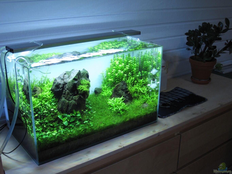 Как украсить аквариум своими руками фото 71