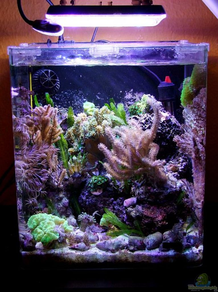 Schon Aquarium Decoration: