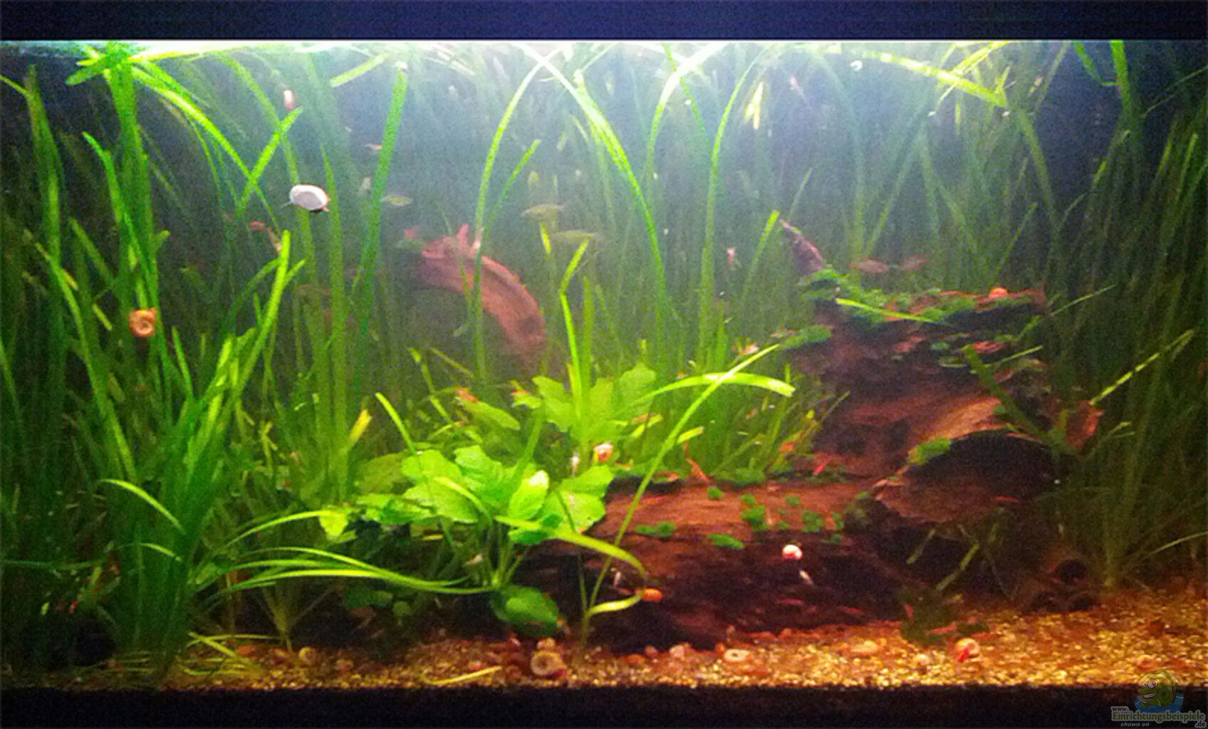 aquarium von miss underwaterlove red cherry co. Black Bedroom Furniture Sets. Home Design Ideas