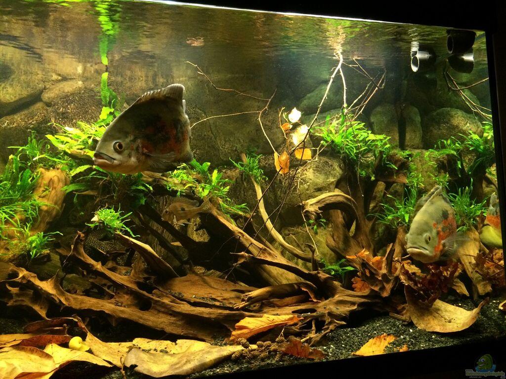 Einrichtungsbeispiele für amazonas aquarien