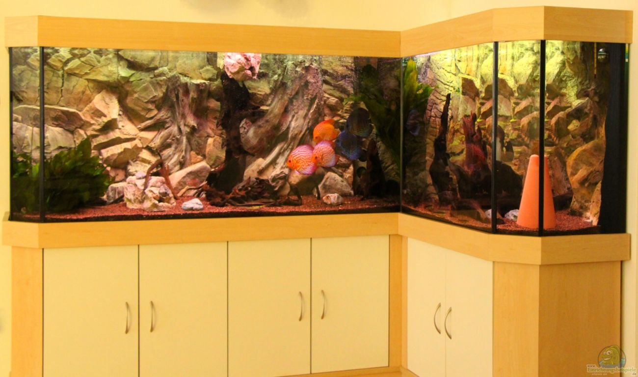 Aquarium von daniel o diskus aquarium l form for Aquarium einrichtungsideen