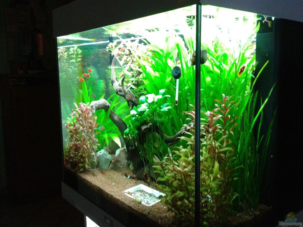 Aquarium von Ronny Wagner  120l Geselschaftsbecken