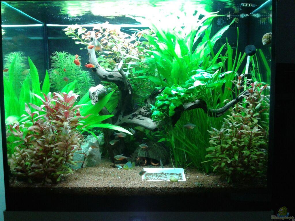 aquarium von ronny wagner 120l geselschaftsbecken. Black Bedroom Furniture Sets. Home Design Ideas