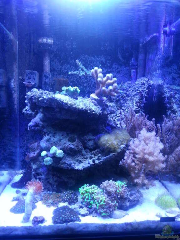 aquarium von cuny 60 liter nanocube. Black Bedroom Furniture Sets. Home Design Ideas