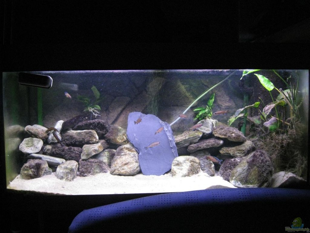 Aquarium Bauanleitung Selbstbau zuchtregal erste fotos