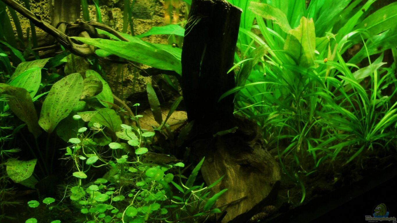 aquarium von fischkopp83 mein st ck s damerika. Black Bedroom Furniture Sets. Home Design Ideas
