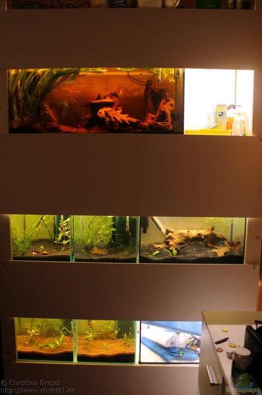 aquarium von chrisi01 l 134 artenbecken. Black Bedroom Furniture Sets. Home Design Ideas