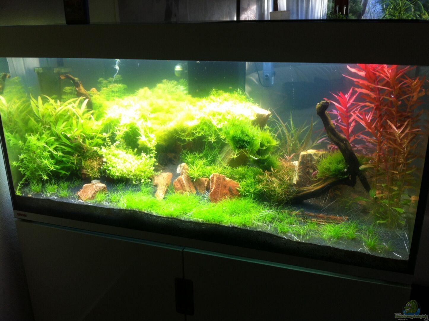aquarium von lisa242 26429 eheim incpiria 400. Black Bedroom Furniture Sets. Home Design Ideas