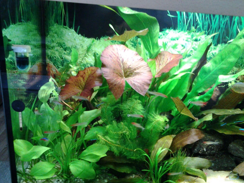 aquarium von phrankdiddie amazonas salmler 125l. Black Bedroom Furniture Sets. Home Design Ideas
