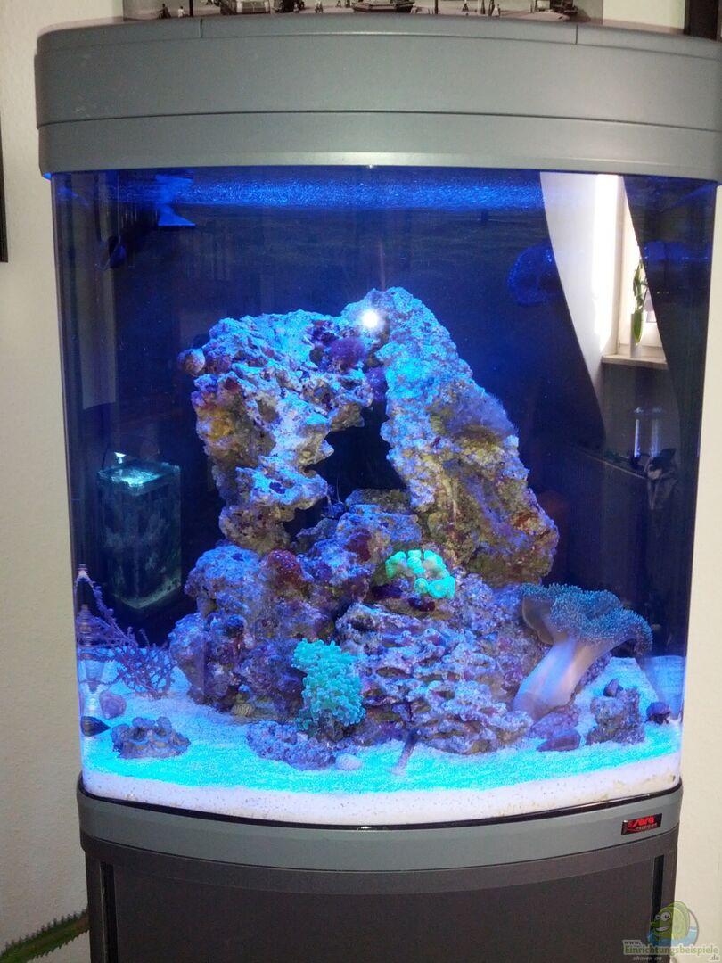 technik im aquarium sera marin led 130 aus sera marin led 130 von kingtritonbs. Black Bedroom Furniture Sets. Home Design Ideas