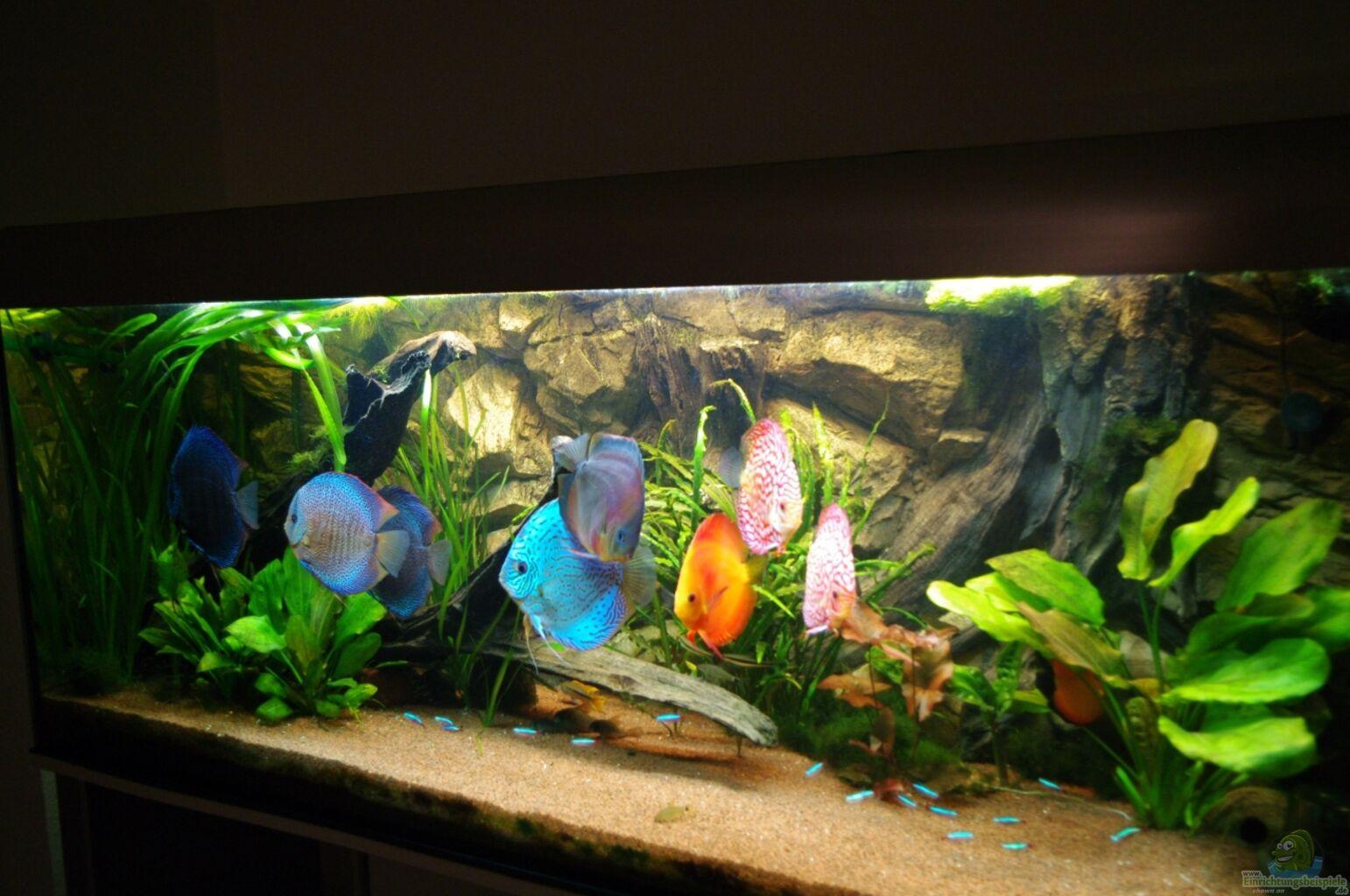 Aquarium von alexander paulus diskus for Diskus aquarium
