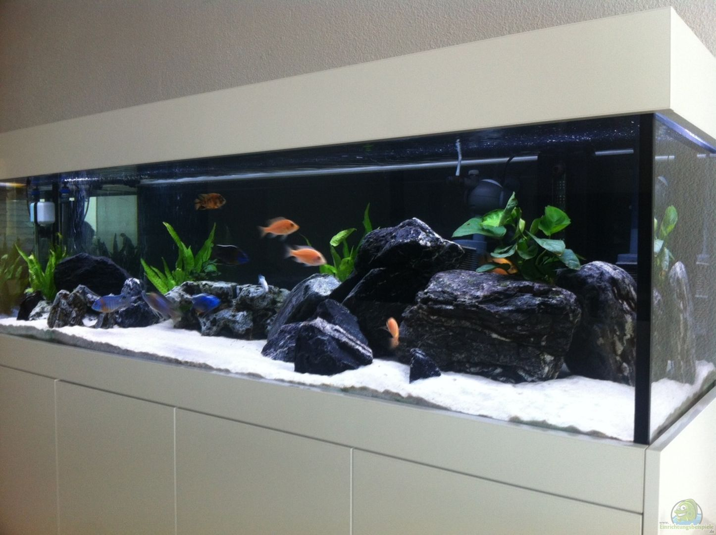 aquarium malawi aus malawi von axxo. Black Bedroom Furniture Sets. Home Design Ideas
