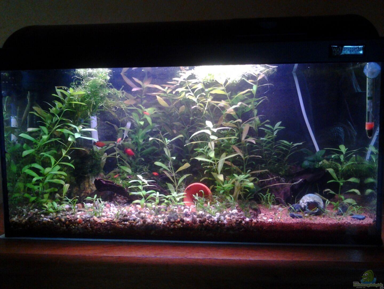 aquarium von derguppy11 becken 26522