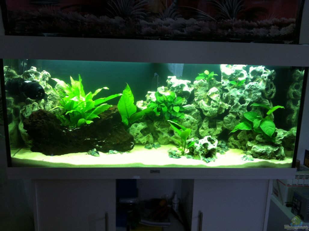 aquarium von down face juwel rio 240. Black Bedroom Furniture Sets. Home Design Ideas