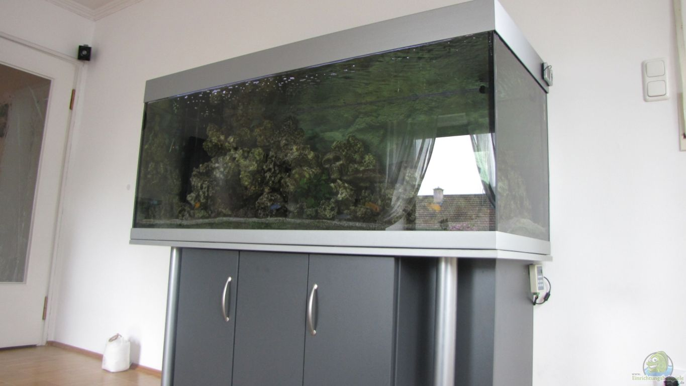 aquarium von dawninmunich malawi. Black Bedroom Furniture Sets. Home Design Ideas