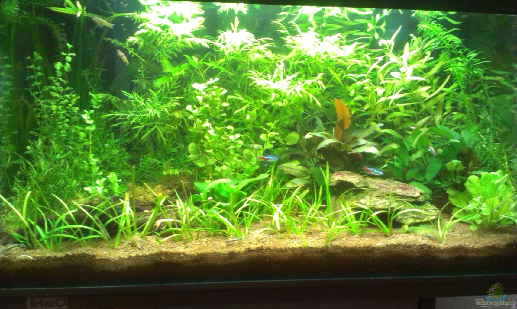 Haustierbedarf Aquarien Aquarium 54l