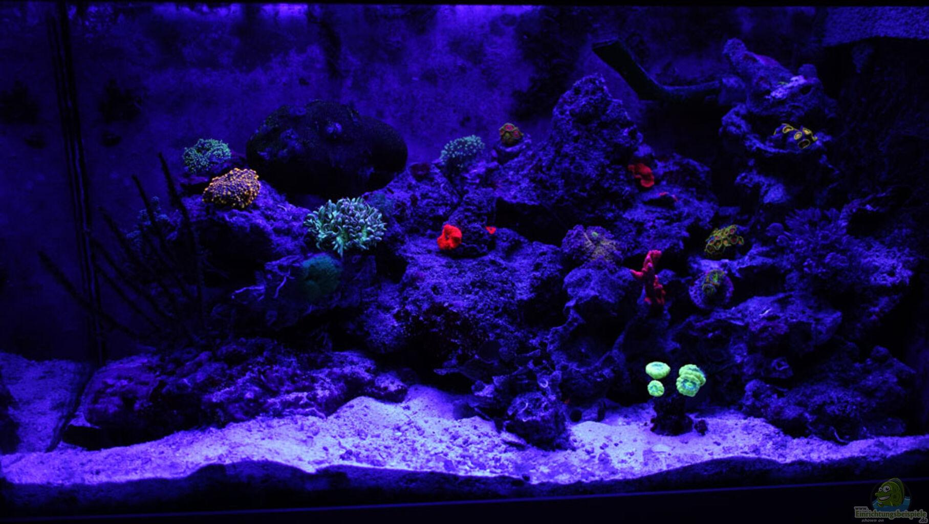 aquarium von box pet meerwasser nano. Black Bedroom Furniture Sets. Home Design Ideas