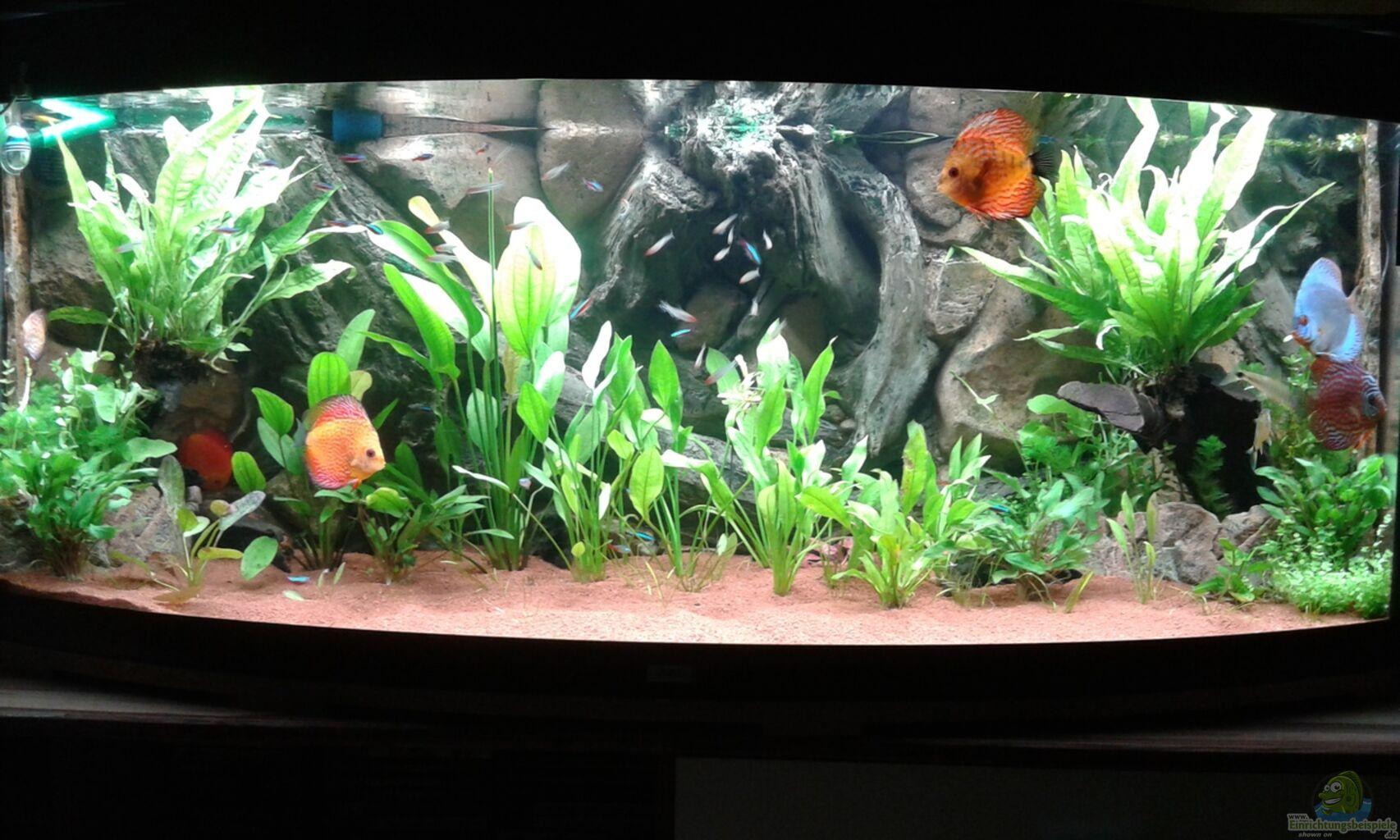 aquarium von rene zwirchmayr juwel diskus amazonas. Black Bedroom Furniture Sets. Home Design Ideas