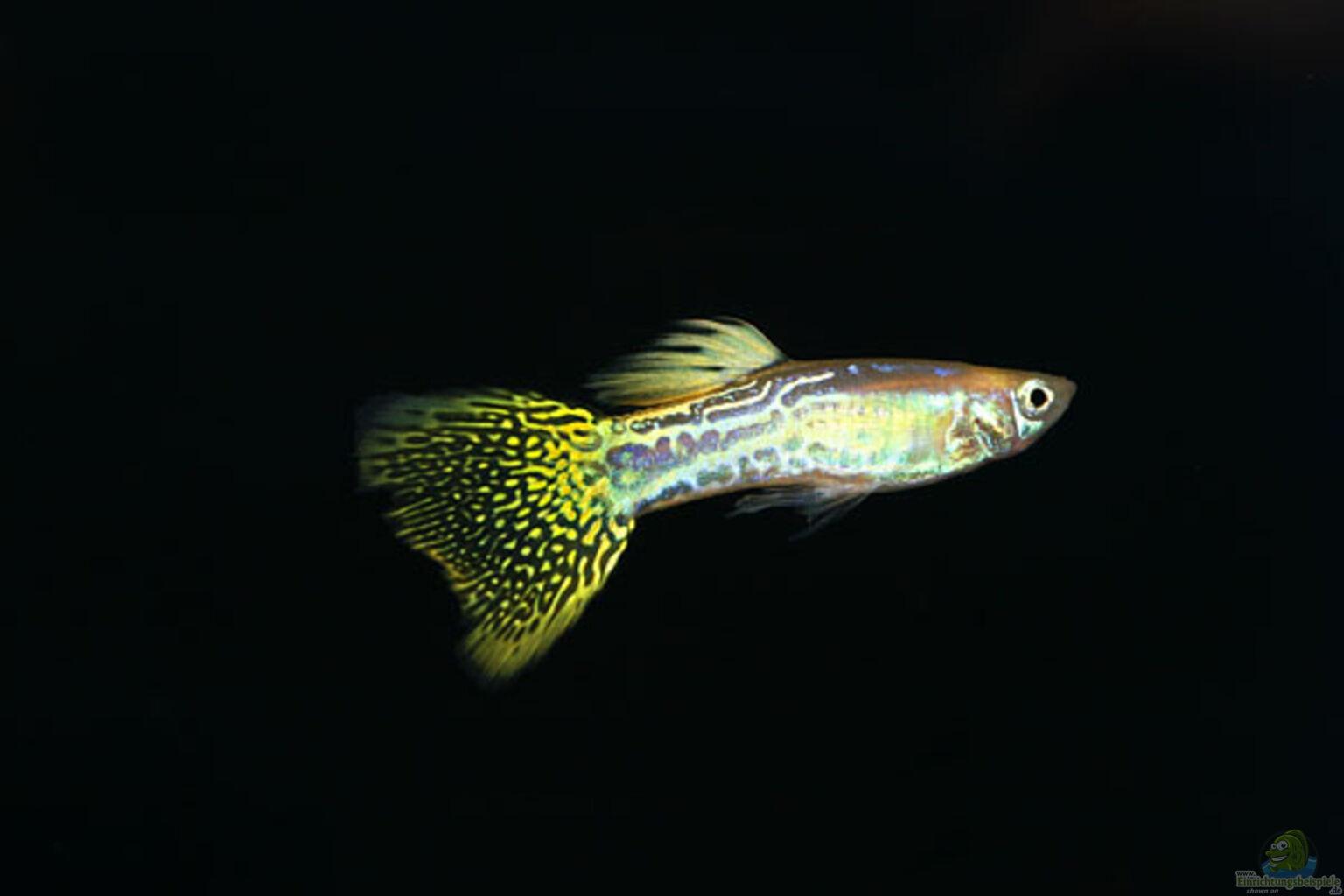 A termolumineszcencia randevúk megadhatják a dátumokat, amikor bármilyen típusú anyagon használják