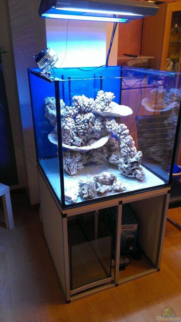 aquarium von stefan eckers becken 26778. Black Bedroom Furniture Sets. Home Design Ideas