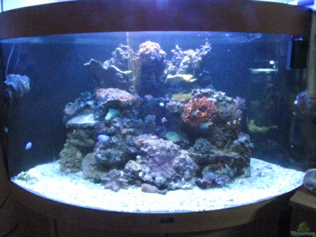 aquarium von aqua art krefeld trigon 350 meerwasser. Black Bedroom Furniture Sets. Home Design Ideas