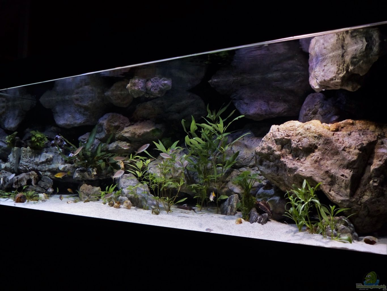 aquarium von martina meine ruheoase. Black Bedroom Furniture Sets. Home Design Ideas