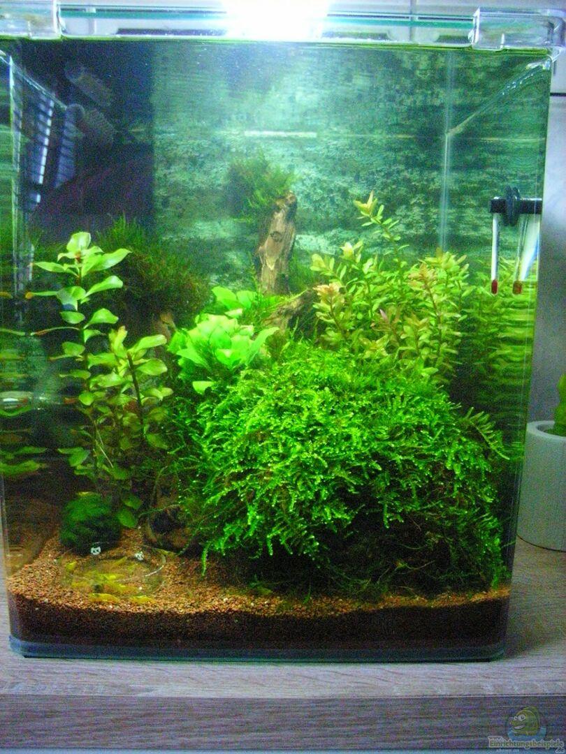 ▷ Badezimmer Aquarium aus Becken 27079 von easy