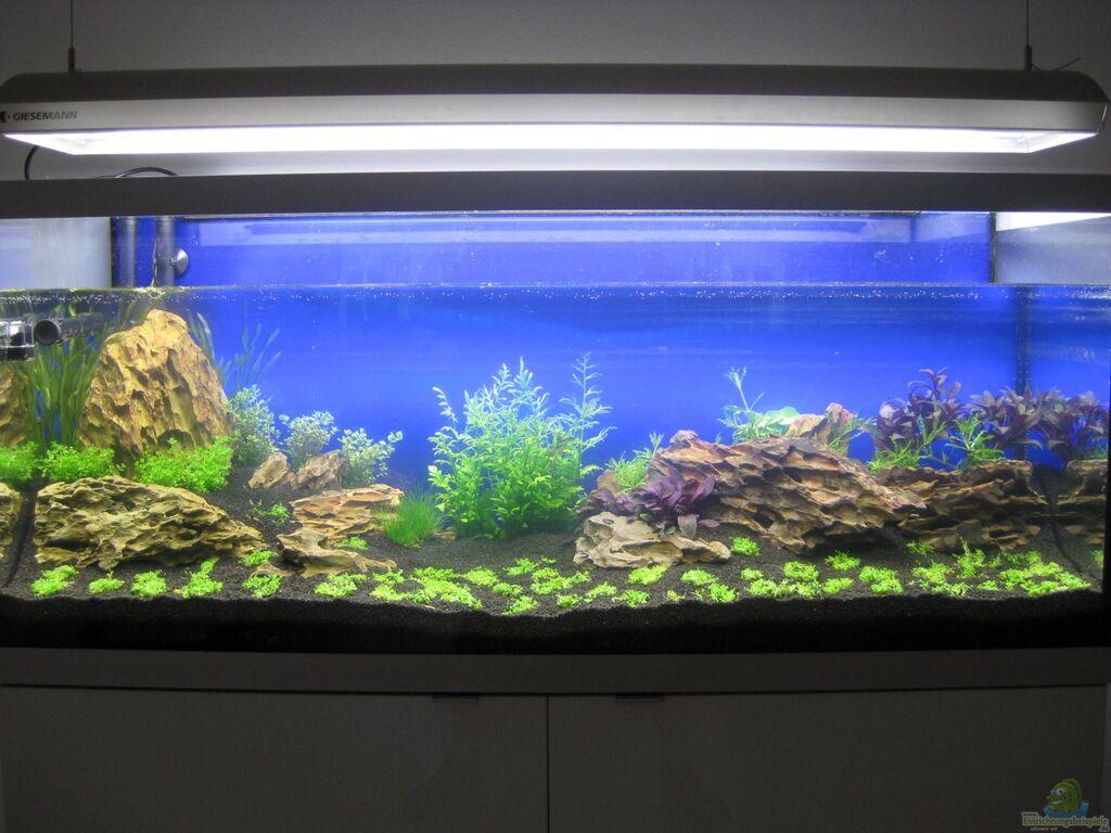 aquarium von ron berlin becken 27092. Black Bedroom Furniture Sets. Home Design Ideas