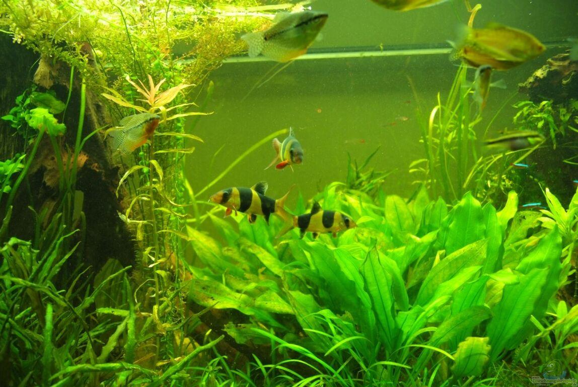 aquarium von rheinl nder gr ner mangroven dschungel. Black Bedroom Furniture Sets. Home Design Ideas
