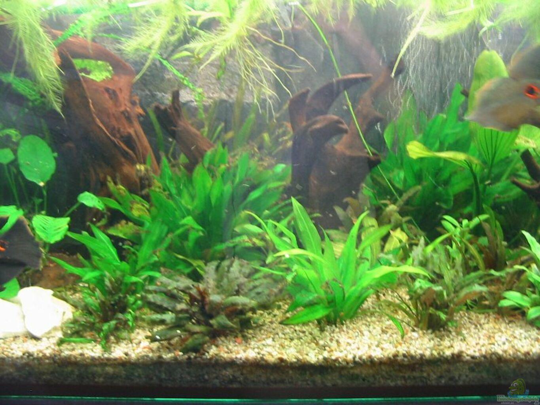 aquarium von mike kurz becken 2723. Black Bedroom Furniture Sets. Home Design Ideas
