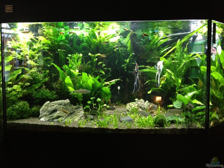 Aquarium von liwebe 27285 350 liter k che for Aquarium 350 litres