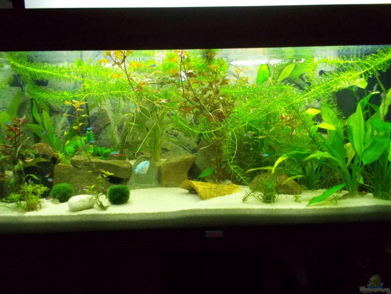 Aquarium von thomas huber 27445 dschungel - Dekoration dschungel ...