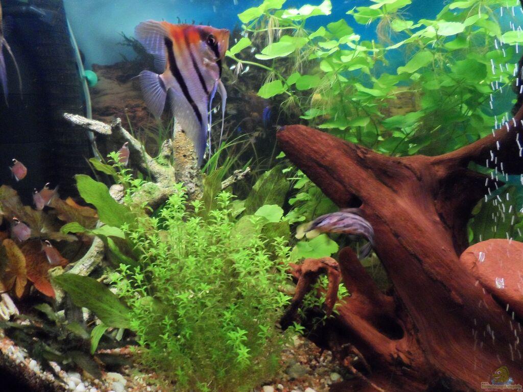 aquarium von s04peter becken 27454. Black Bedroom Furniture Sets. Home Design Ideas
