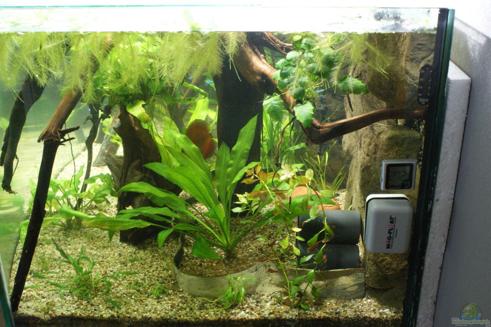 bersicht ber die aquariumbilder aus den beispielen seite 156. Black Bedroom Furniture Sets. Home Design Ideas
