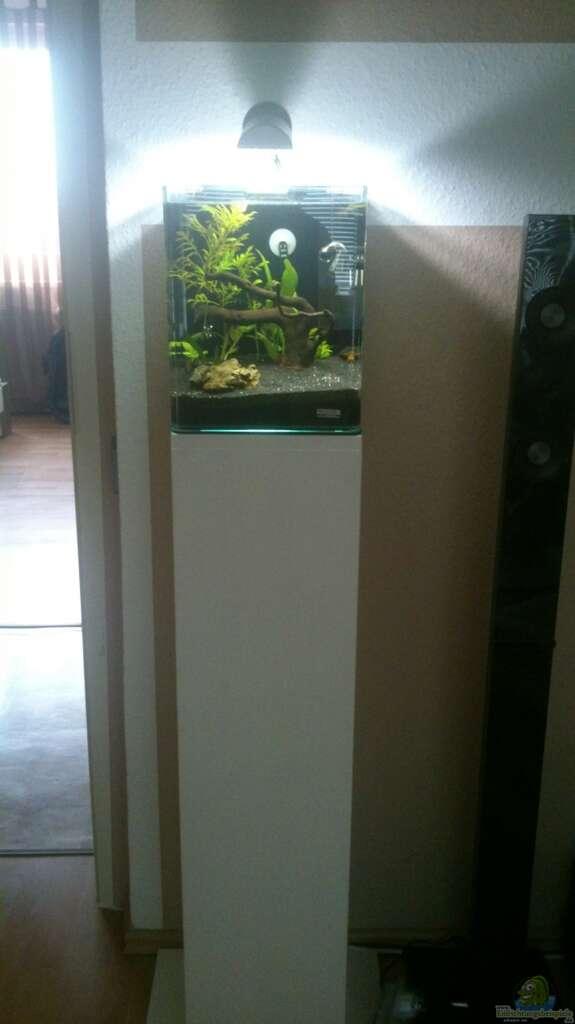 aquarium von nero nano cube. Black Bedroom Furniture Sets. Home Design Ideas