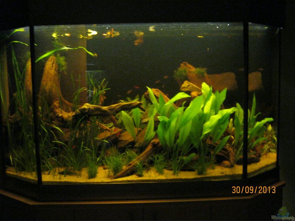 aquarium licht excellent aquarium licht with aquarium. Black Bedroom Furniture Sets. Home Design Ideas
