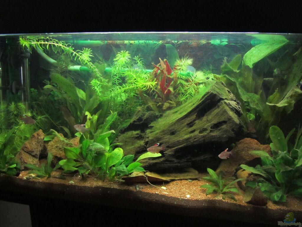 aquarium von h rnchen s damerika. Black Bedroom Furniture Sets. Home Design Ideas