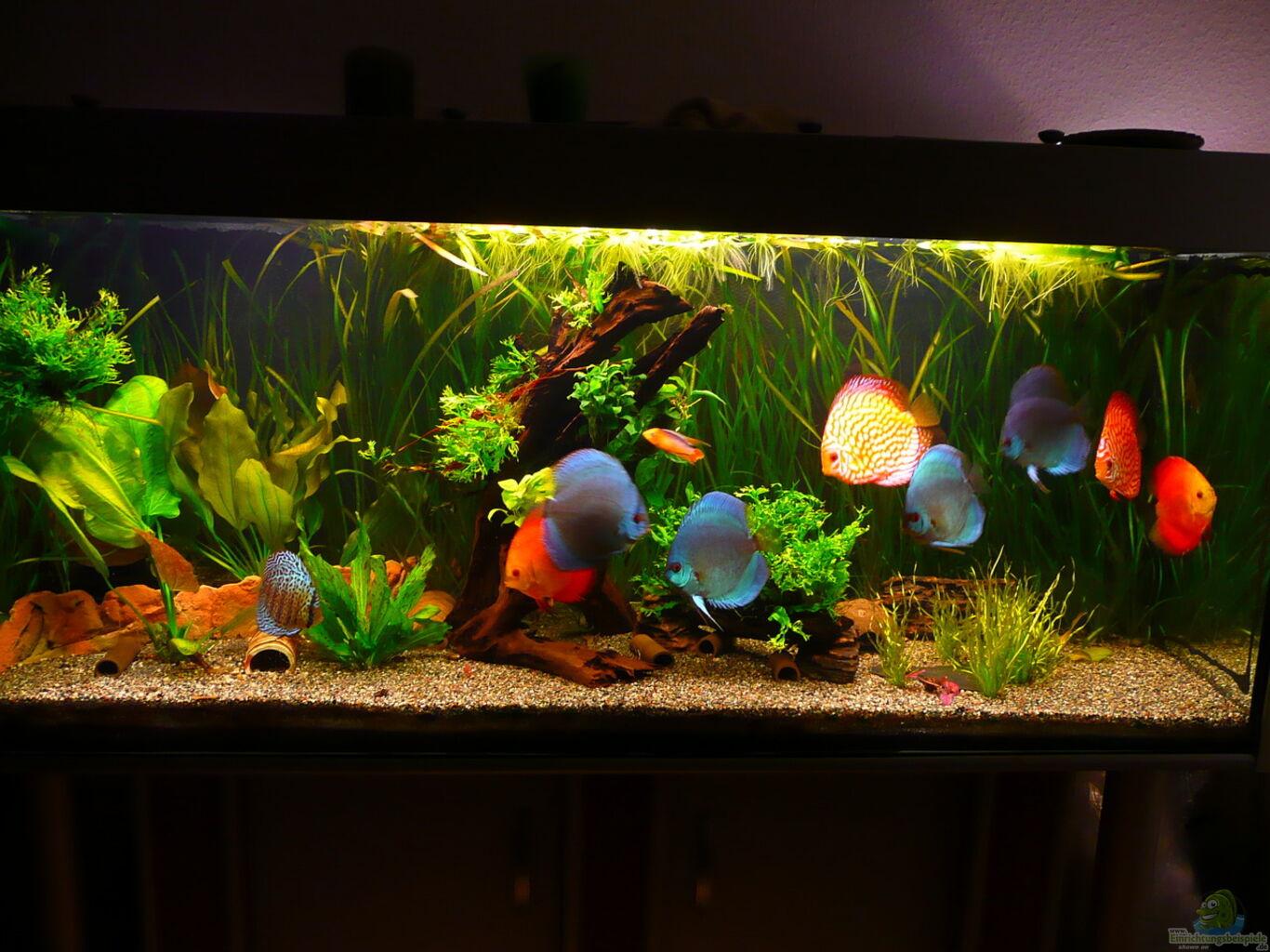 aquarium von aqualady diskus. Black Bedroom Furniture Sets. Home Design Ideas