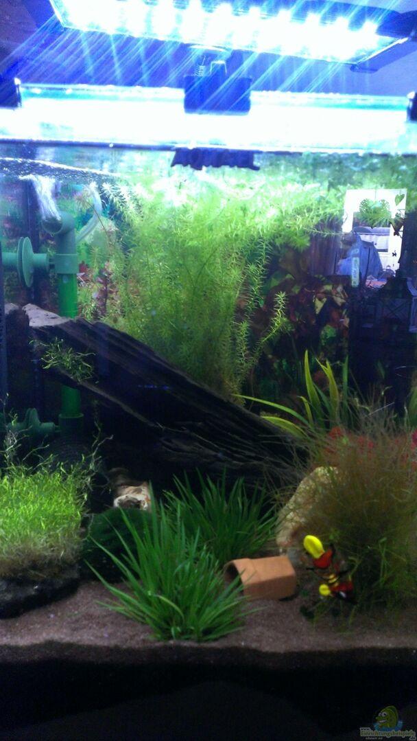 aquarium von jan h becken 27669 aufgel st. Black Bedroom Furniture Sets. Home Design Ideas